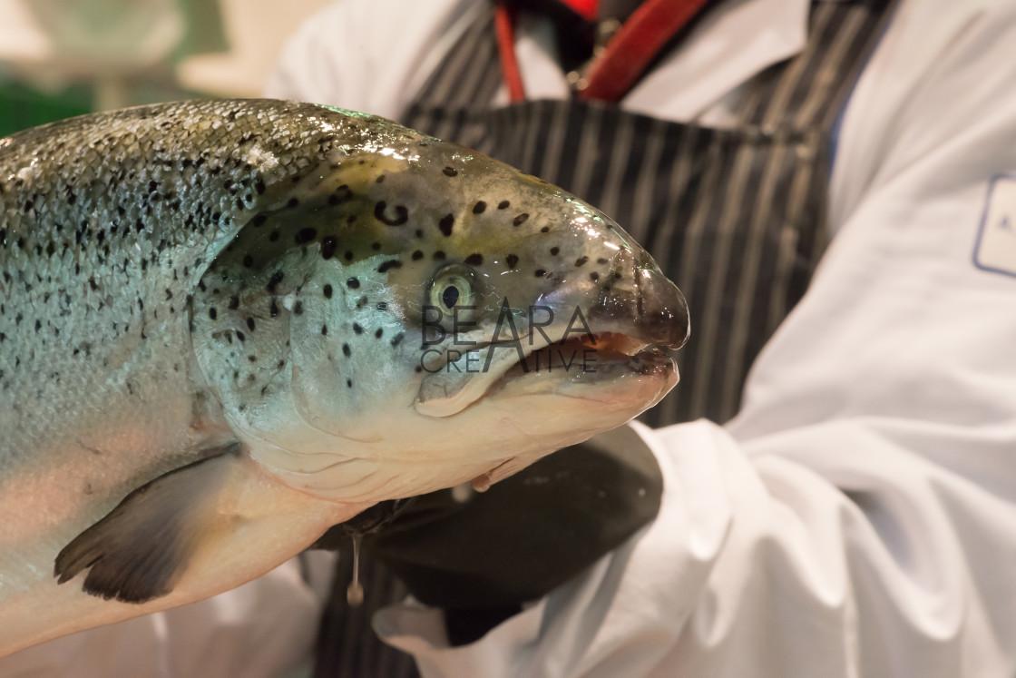 """Fishmonger holding salmon"" stock image"