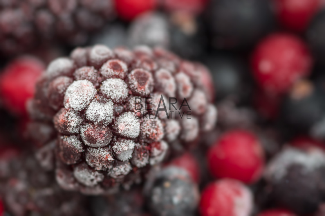 """Frozen loganberry"" stock image"