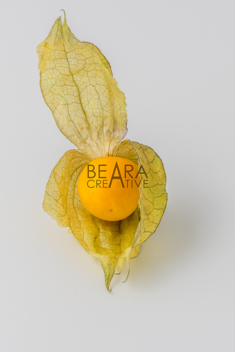 """One physalis fruit white background"" stock image"