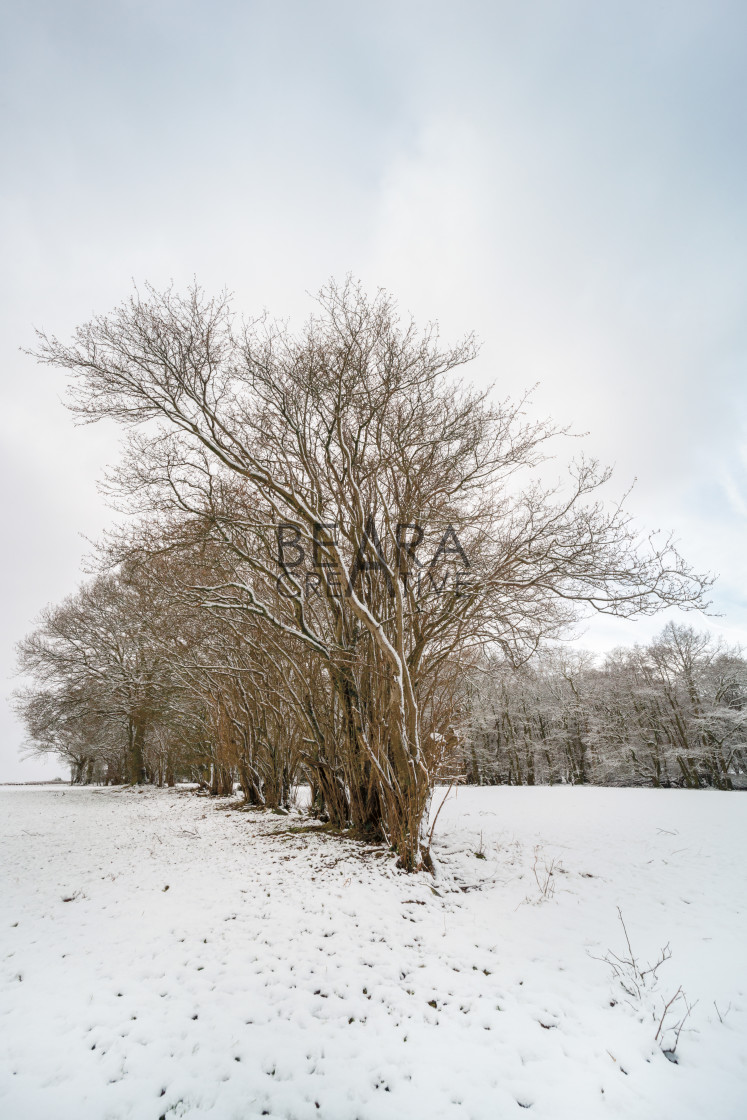 """Brecon Beacons winter tree scene"" stock image"