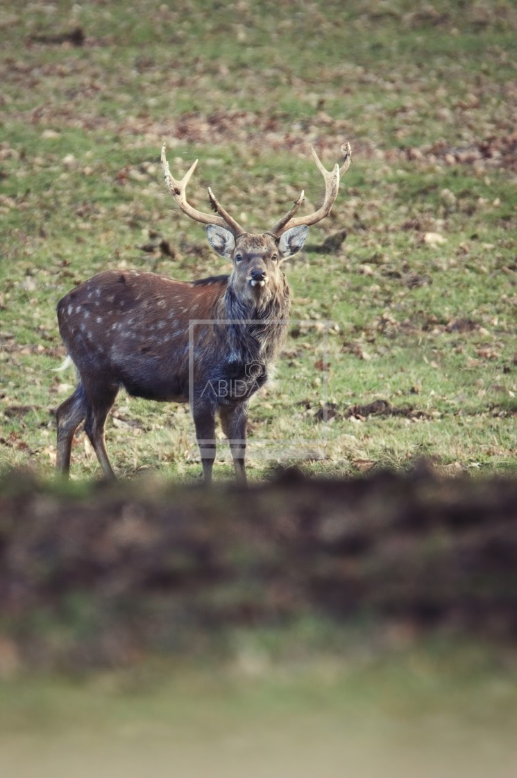 """A Deer Encounter (2)"" stock image"