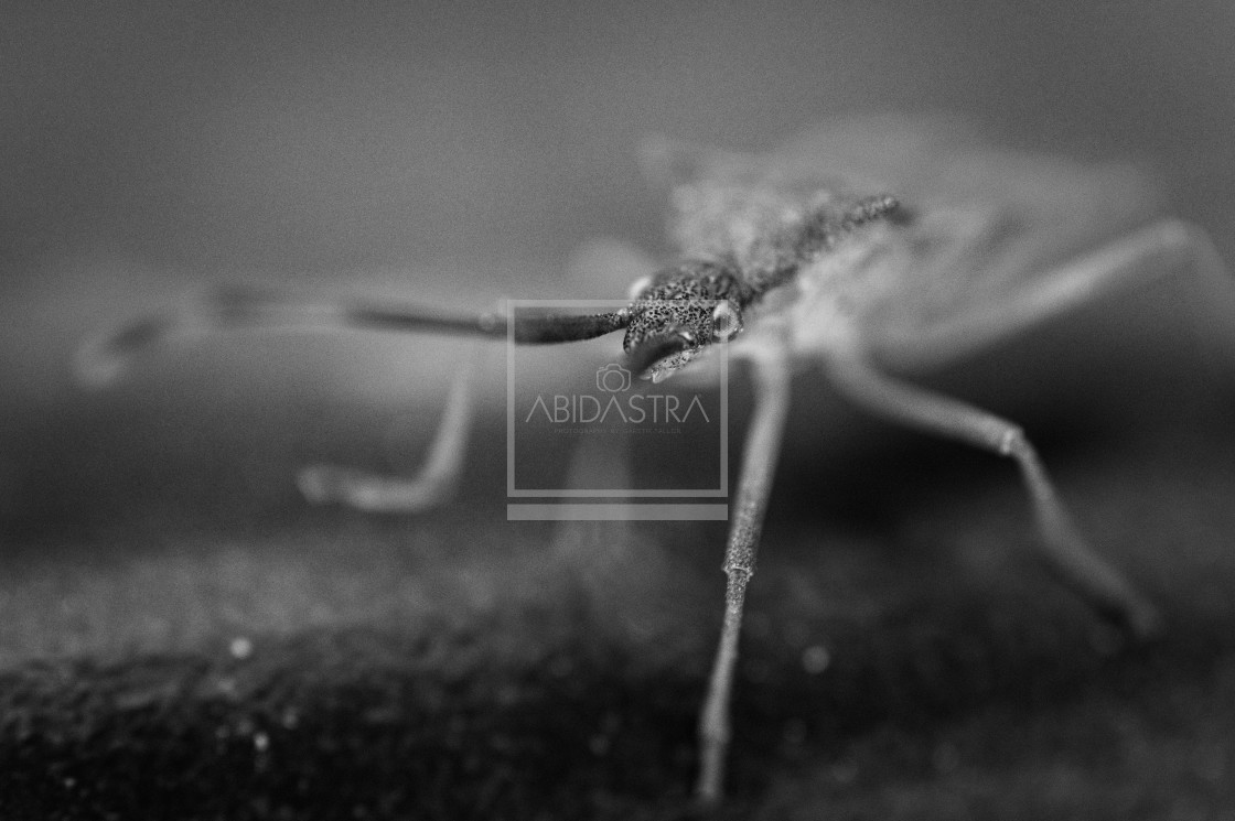 """Damsel bug"" stock image"