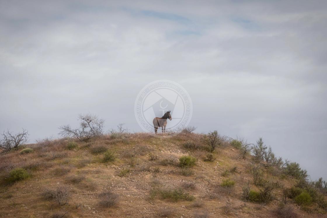 """wildhorse-wild-west-us-solo"" stock image"