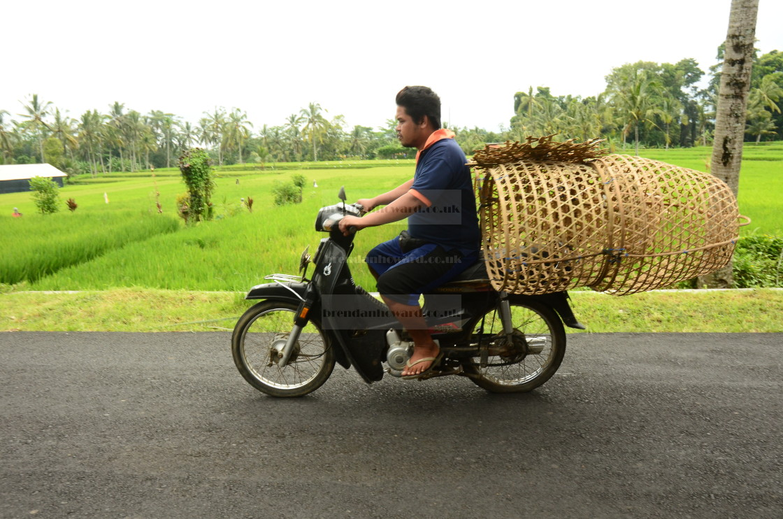 """""""Moped rider in Bali"""" stock image"""