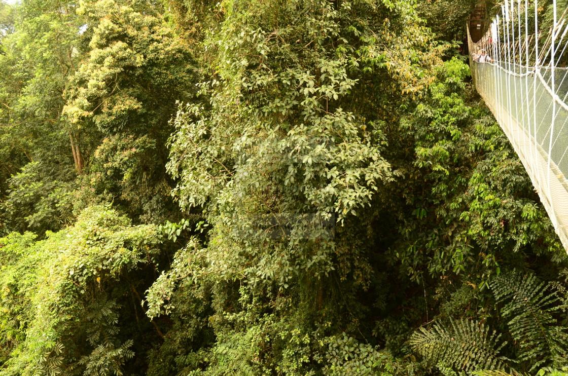 """Borneo Rainforest"" stock image"