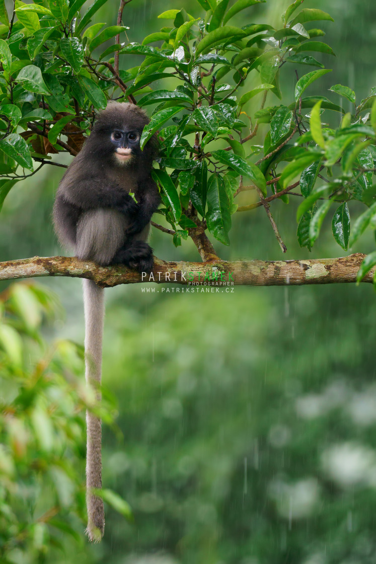 """Raining in rainforest"" stock image"