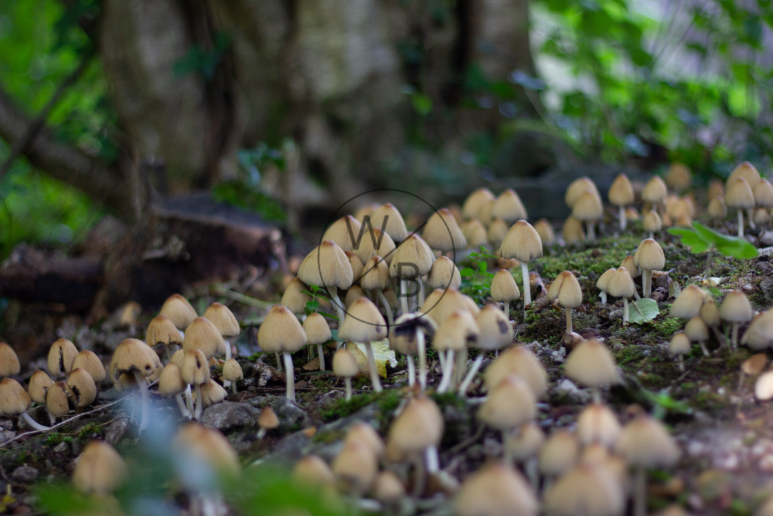 """Mushrooms in Autumn"" stock image"