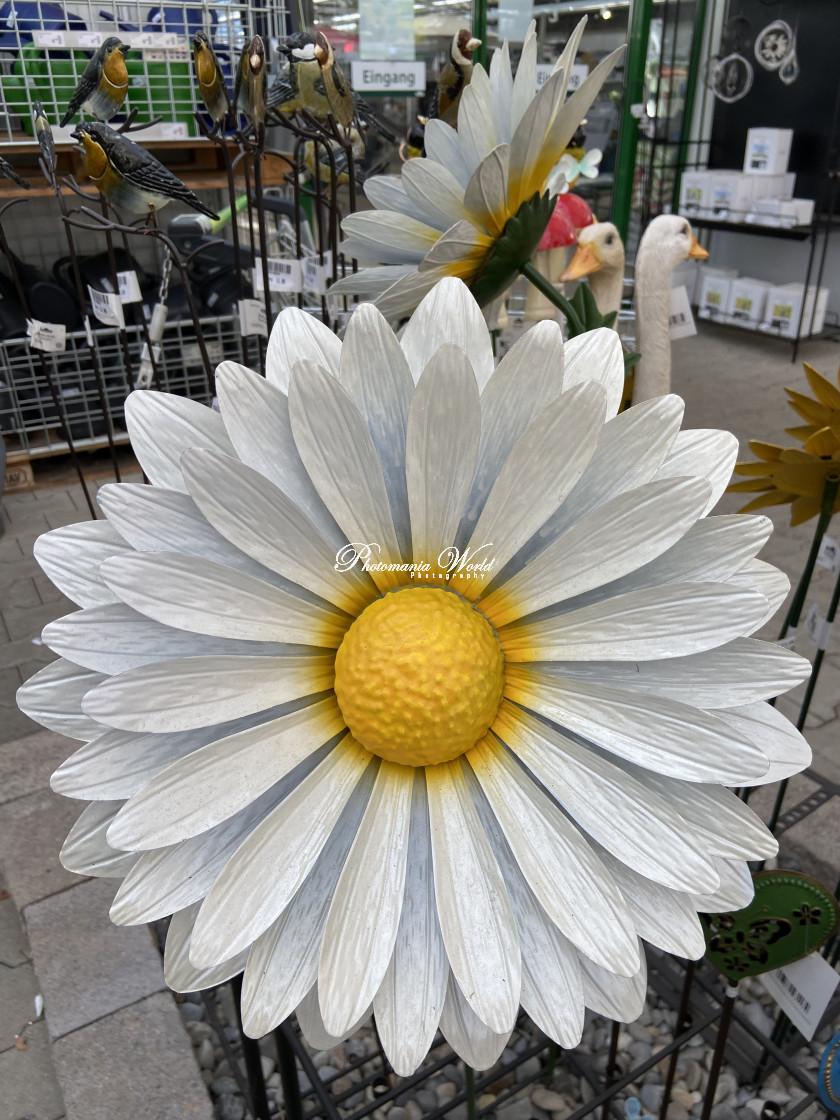 """""""White steel flower"""" stock image"""