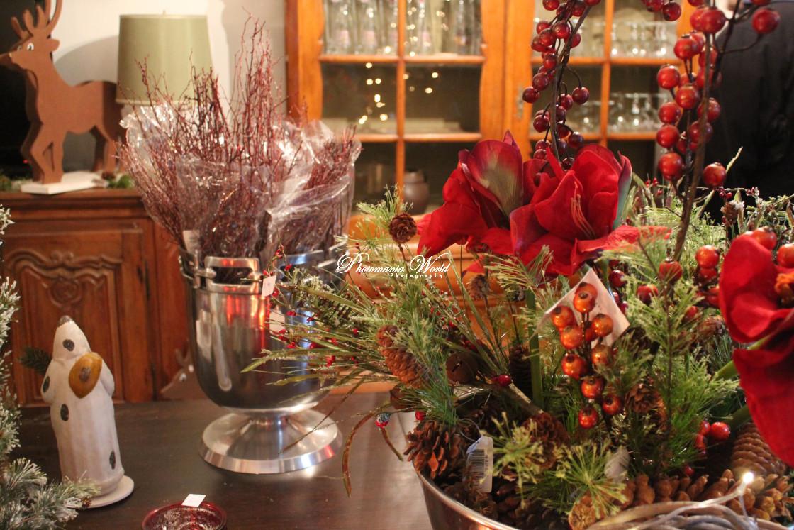 """CHristmas blooming"" stock image"
