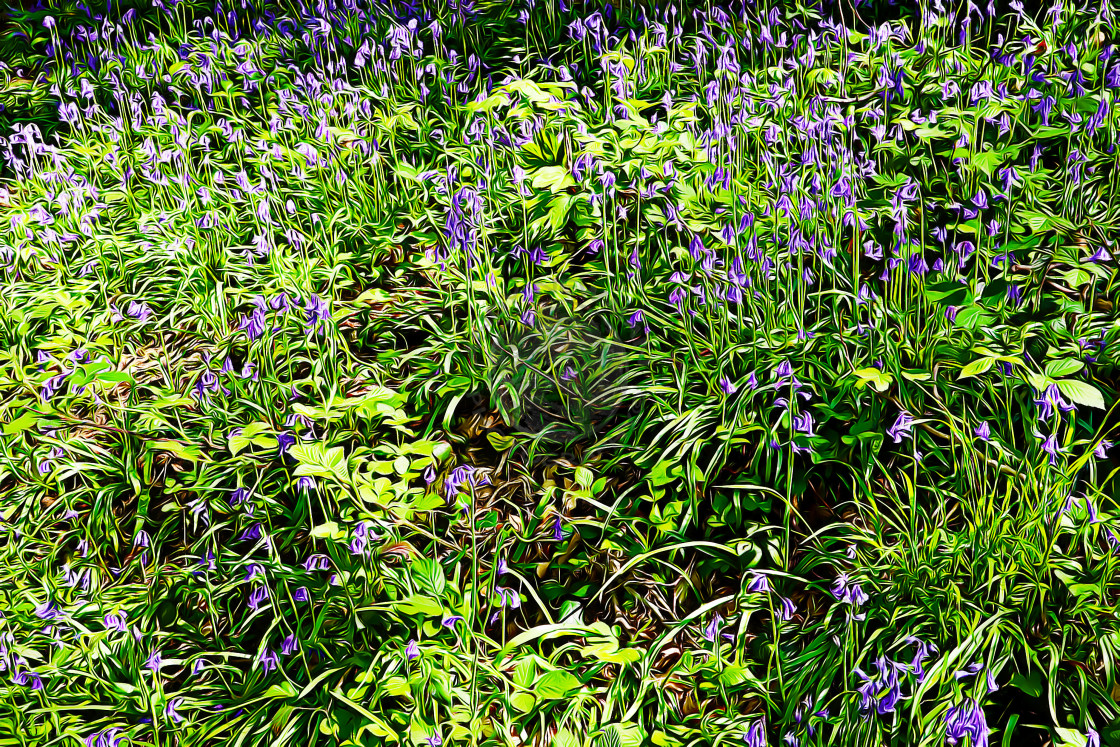 """Bluebells in Springtime"" stock image"