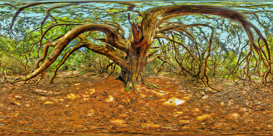 """Yew tree in Kingley Vale (360VR Digital art)"" stock image"
