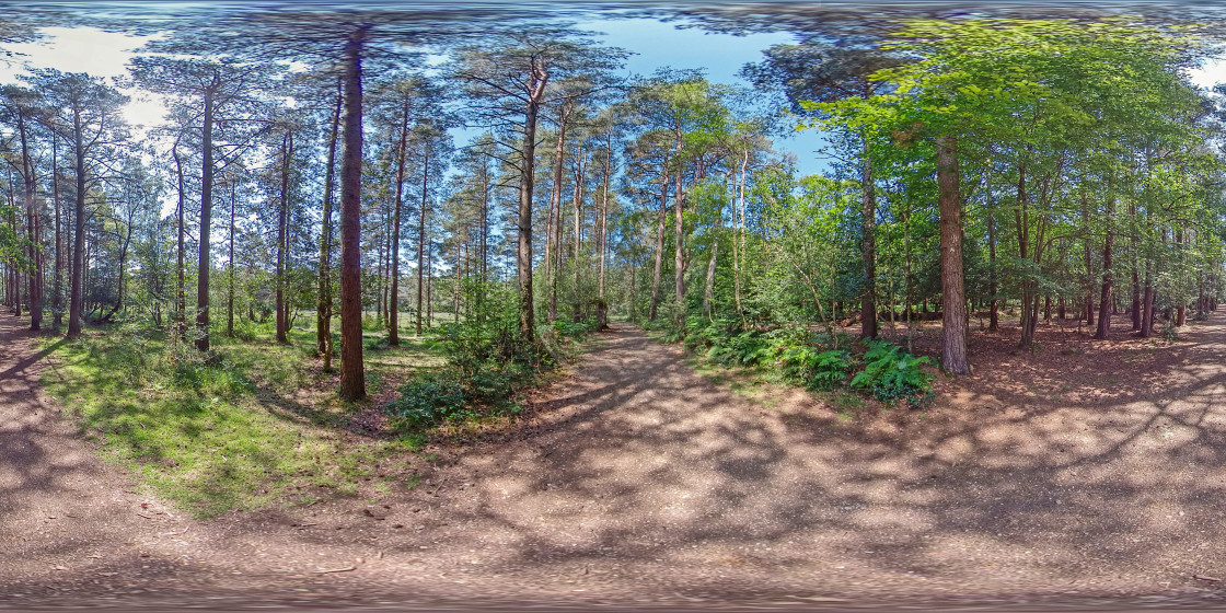 """""""Pine trees in the New Forest (360VR)"""" stock image"""
