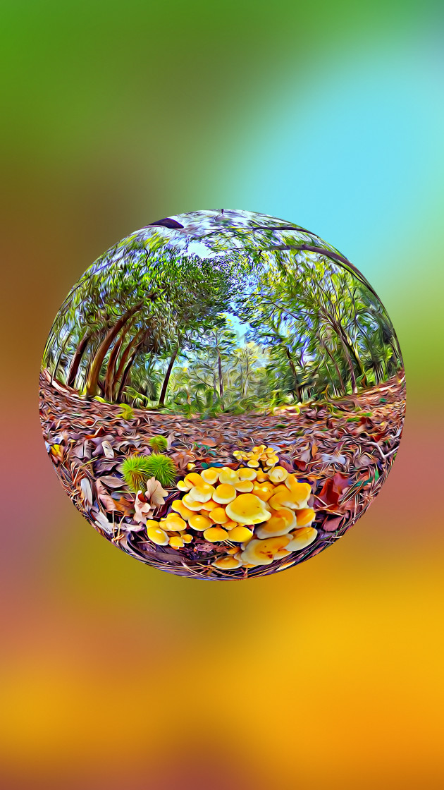 """Mushrooms on the forest floor (digital art)"" stock image"