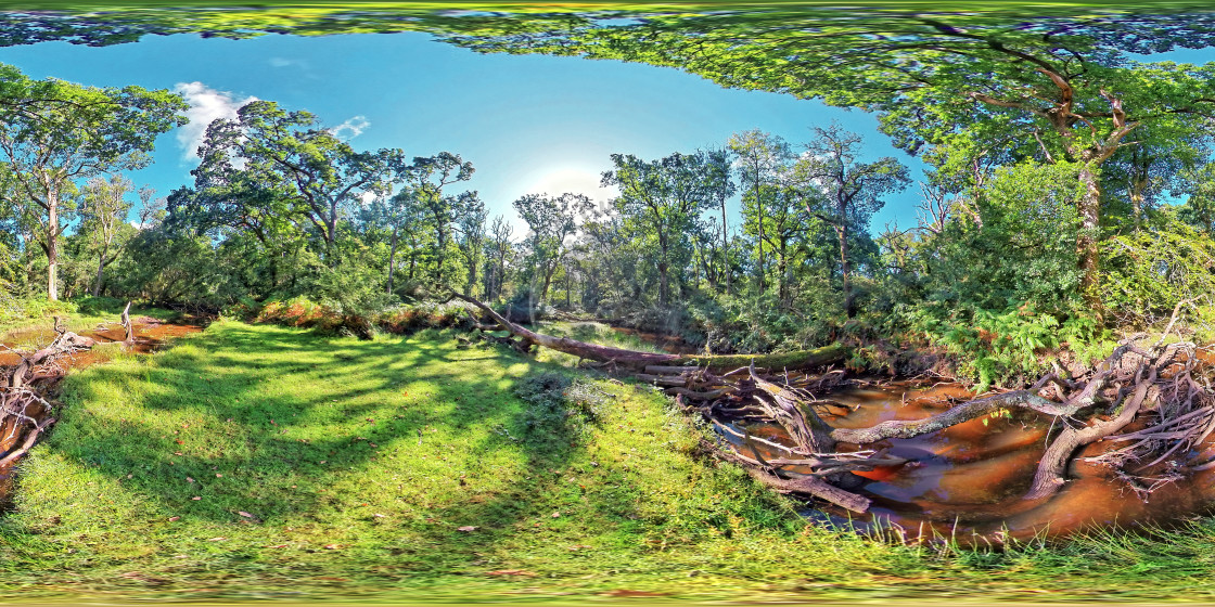 """""""New Forest Stream in Hampshire (360VR)"""" stock image"""