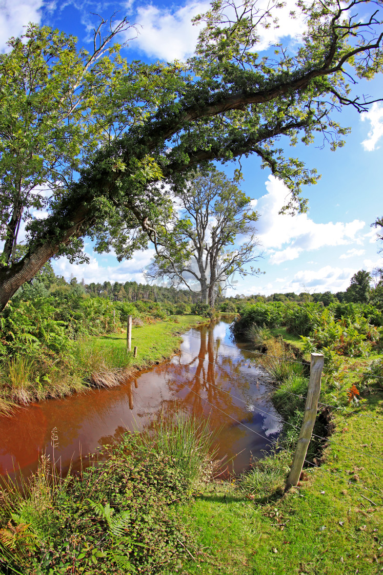 """""""Flechs Stream in the New Forest"""" stock image"""