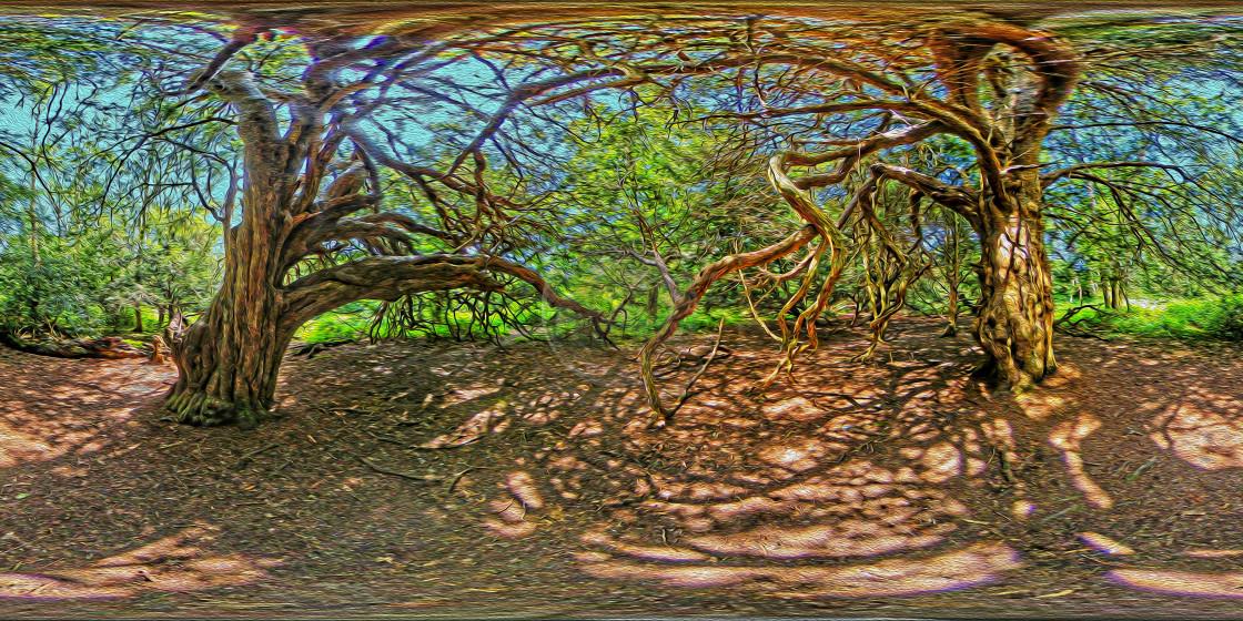 """Yew tree in Kingley Vale (360VR Digital art)"" stock image"