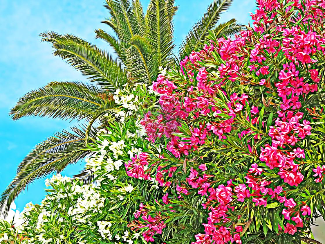 """""""Oleander palm"""" stock image"""