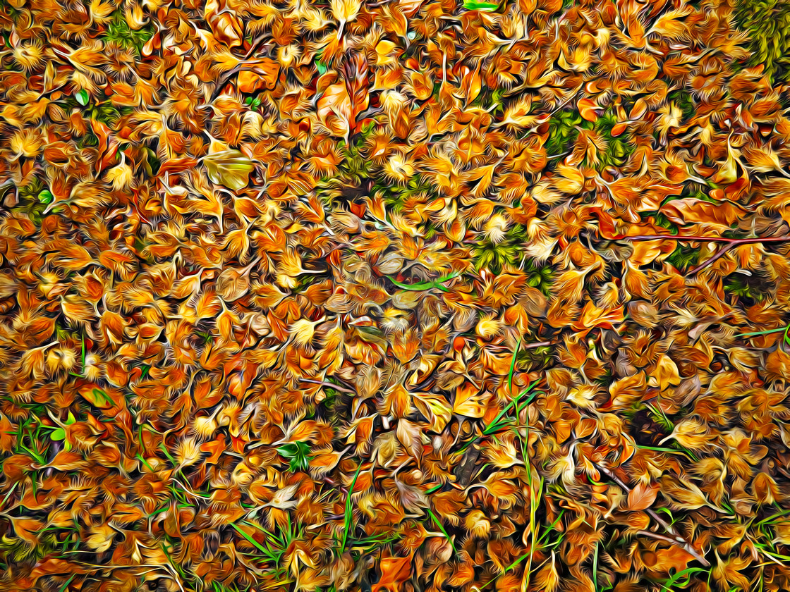 """""""Beech shells on the forest floor"""" stock image"""