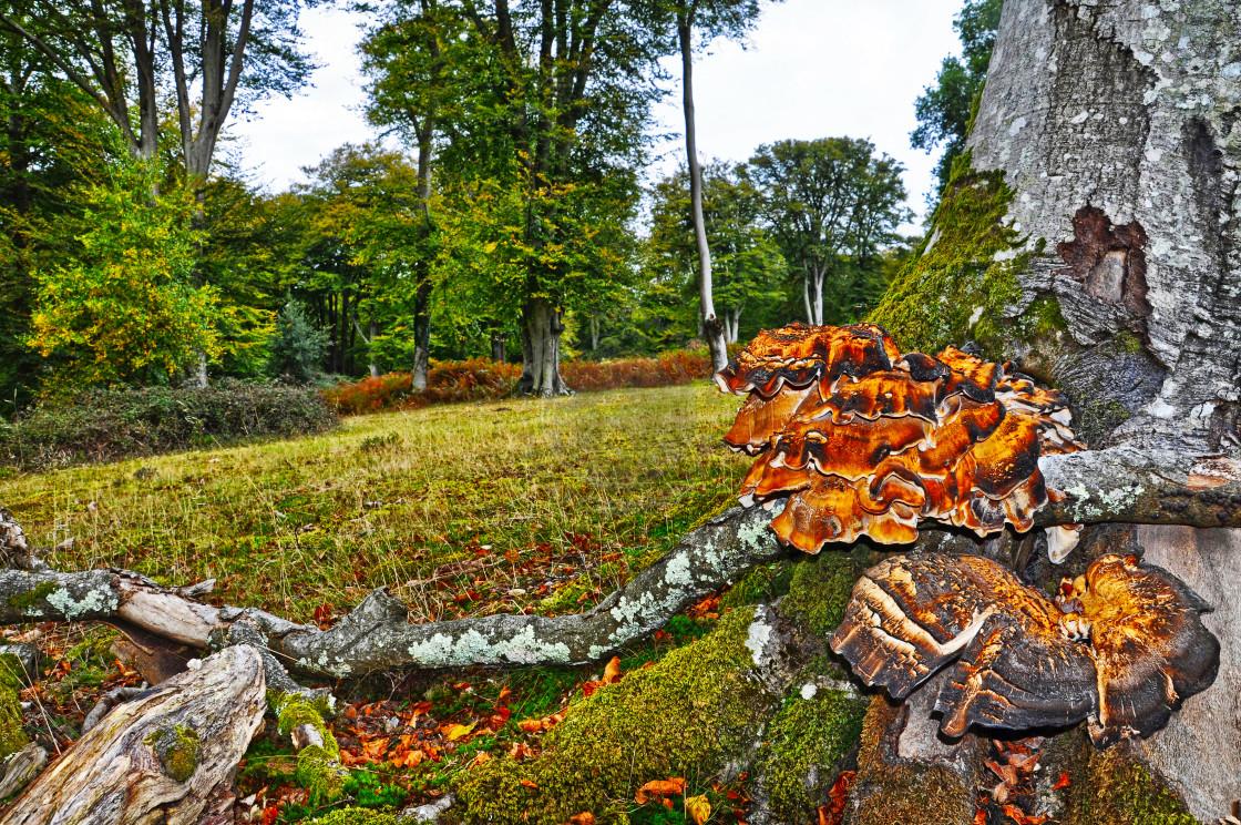 """""""Mushrooms in Autumn"""" stock image"""