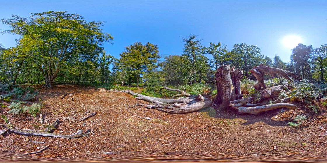 """Fallen tree in Hampshire forest. (360 VR)"" stock image"
