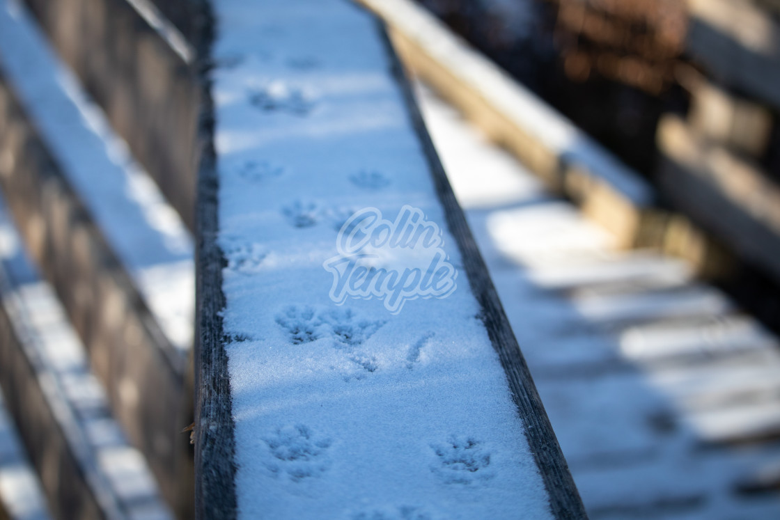 """Squirrel Tracks in Snow on a Wooden Railing"" stock image"