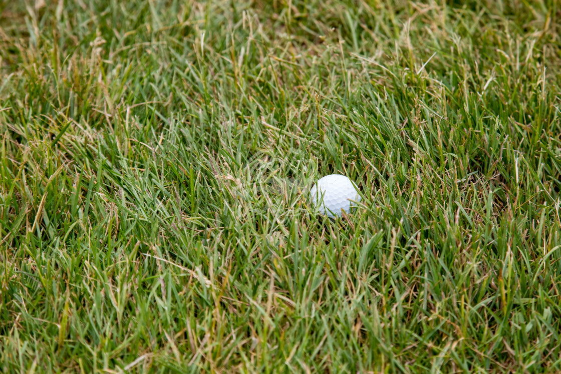 """Golf Ball in the Rough Grass"" stock image"