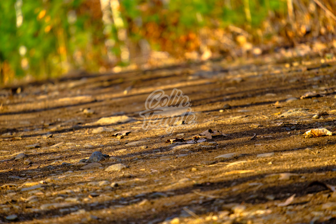 """Autumn trail on the ground"" stock image"