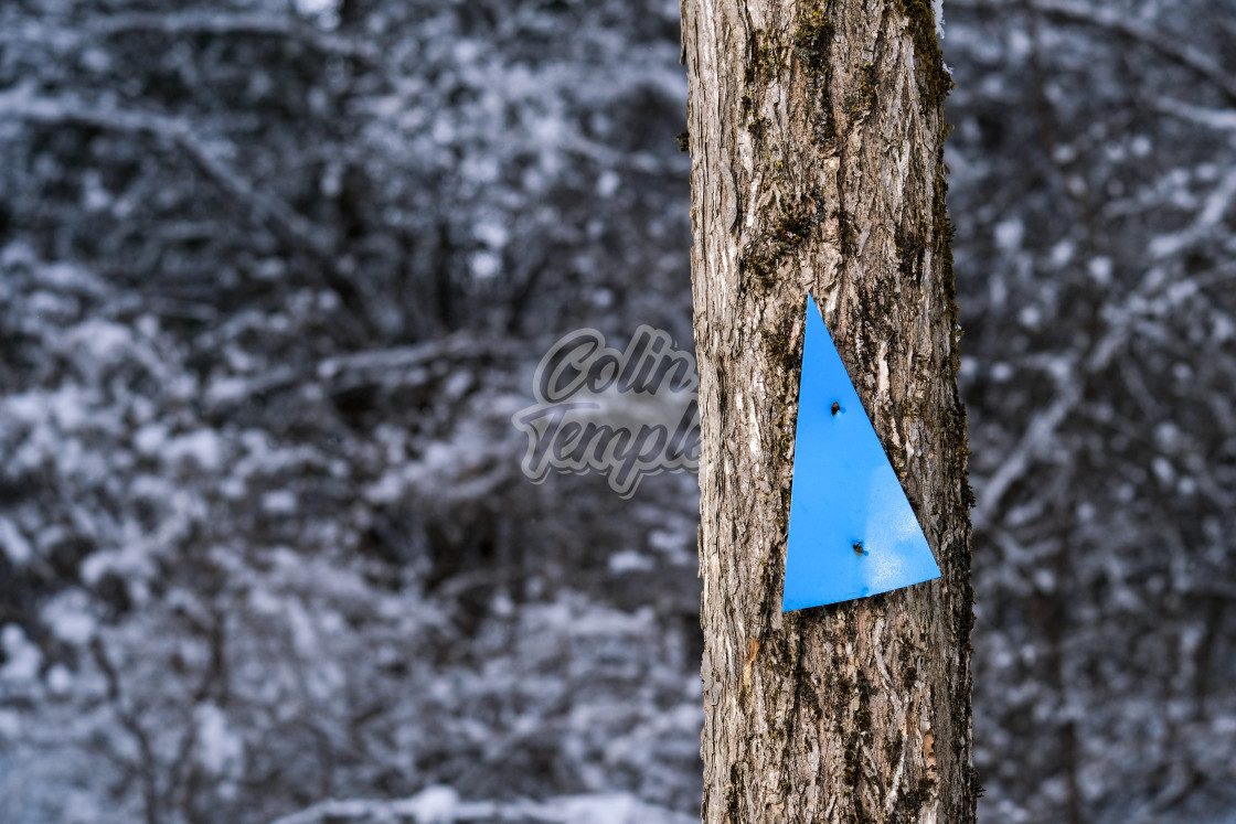 """Trail marker on slender tree in winter"" stock image"