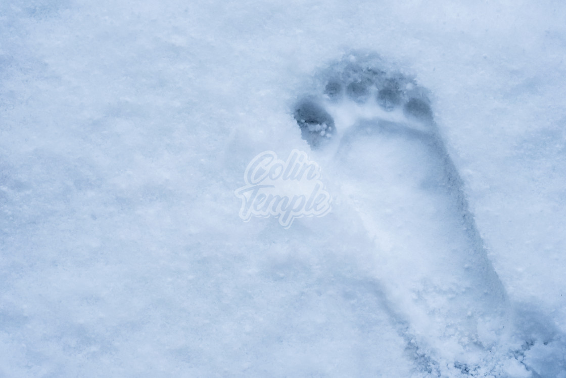 """""""Bare footprint in snow"""" stock image"""