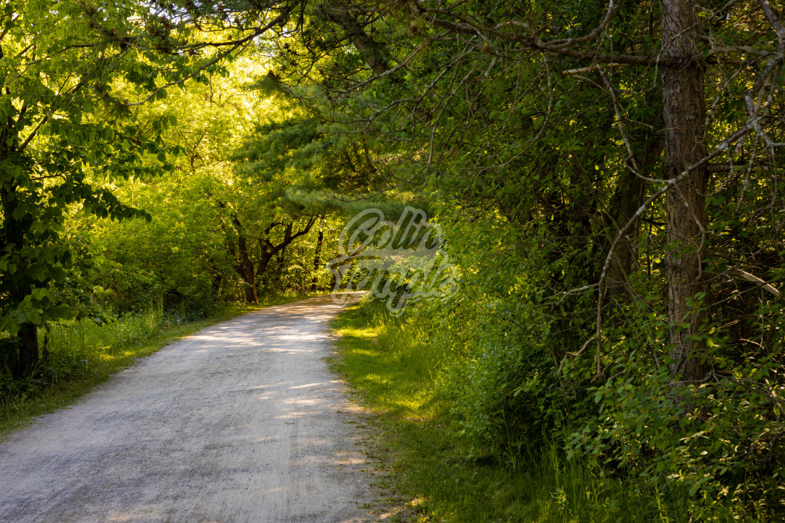 """""""Curved pathway through the woods"""" stock image"""