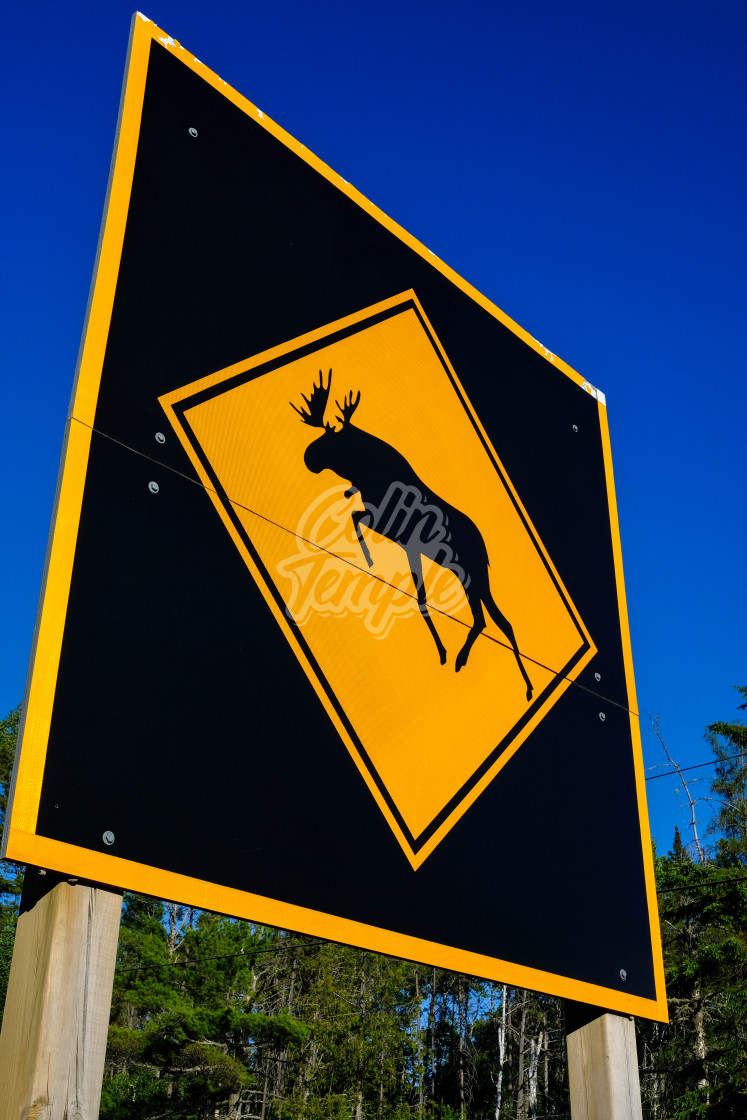 """Large moose crossing warning sign"" stock image"