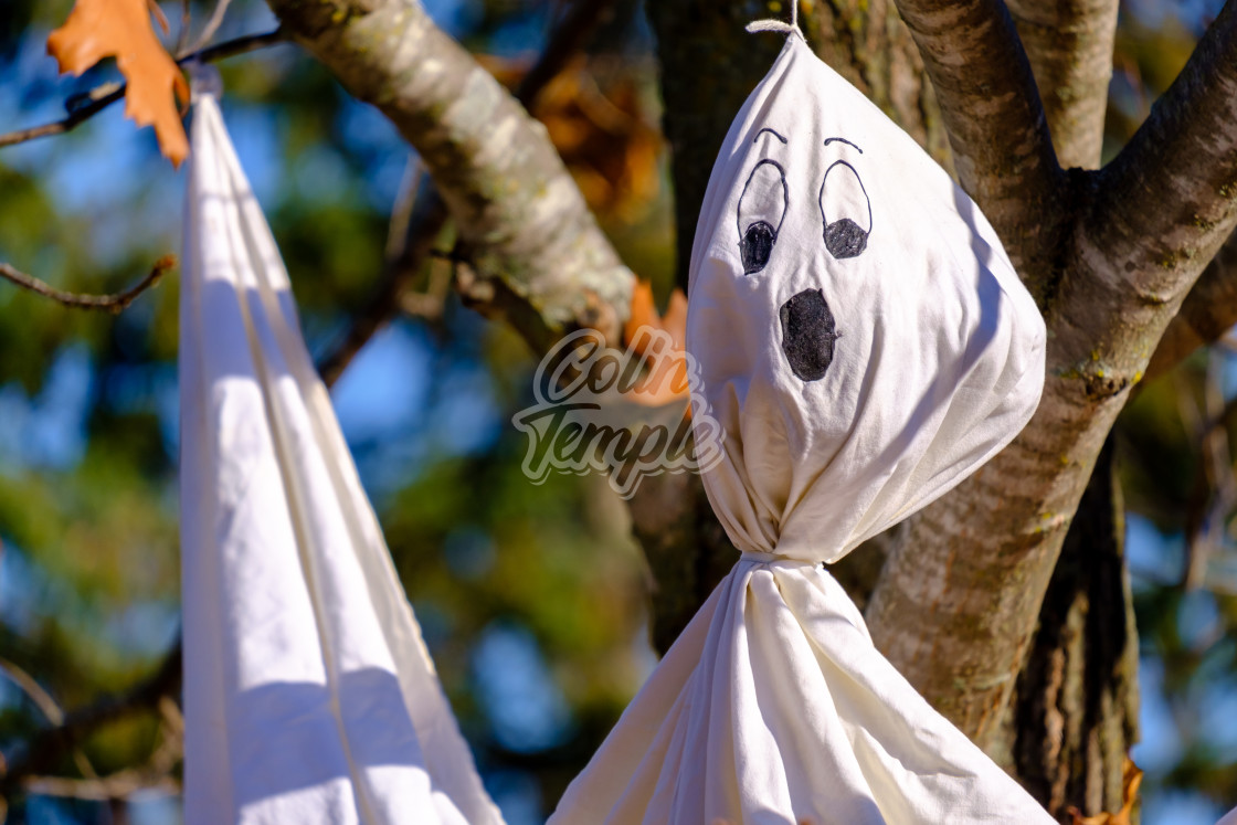 """""""Close-up view of bed sheet ghost hanging in tree"""" stock image"""