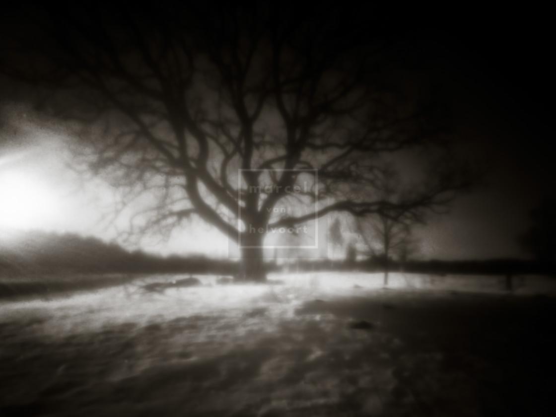 """""""snow trees"""" stock image"""