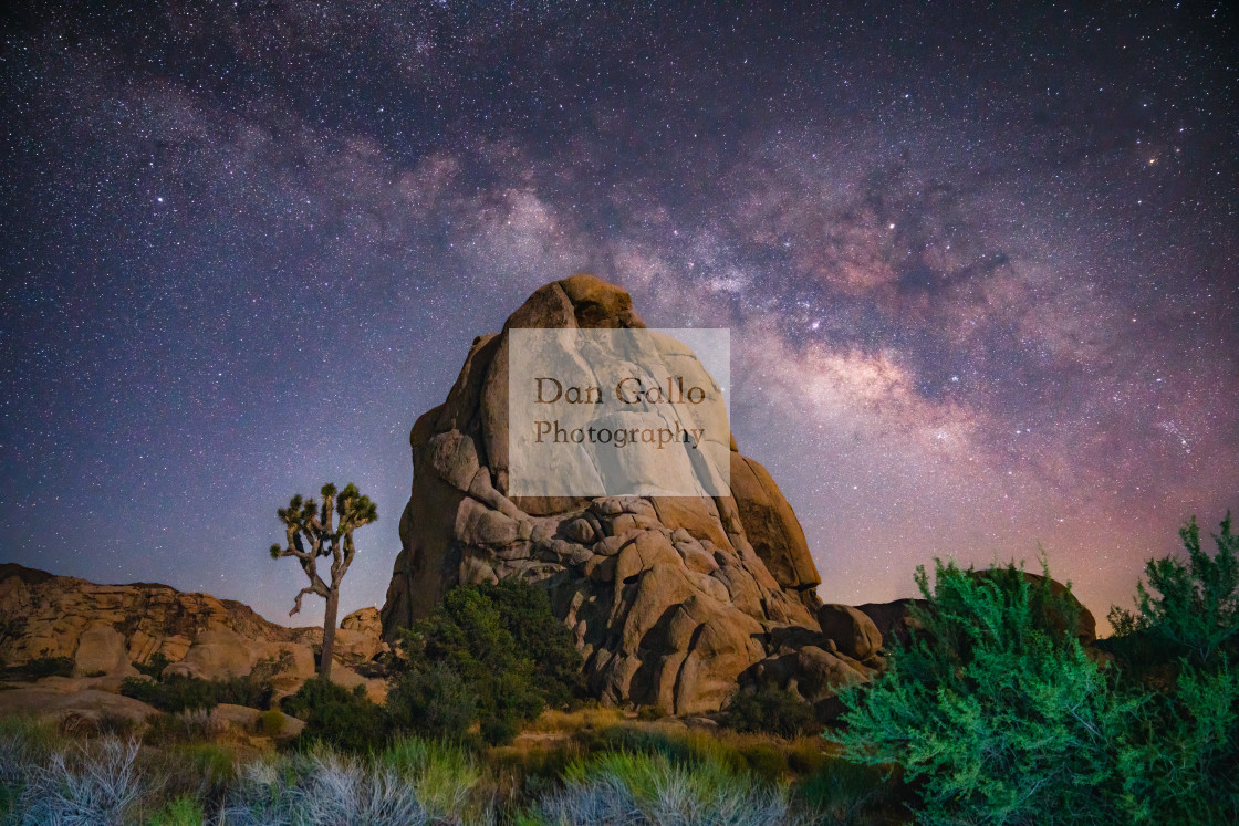 """Joshua Tree Milky Way"" stock image"