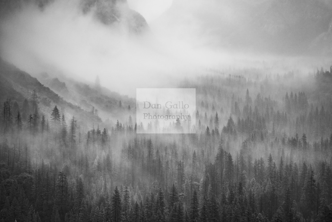 """Foggy Trees"" stock image"