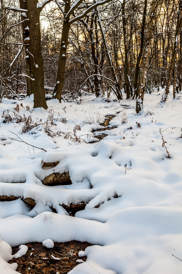 """""""Snow in Epping Forest"""" stock image"""