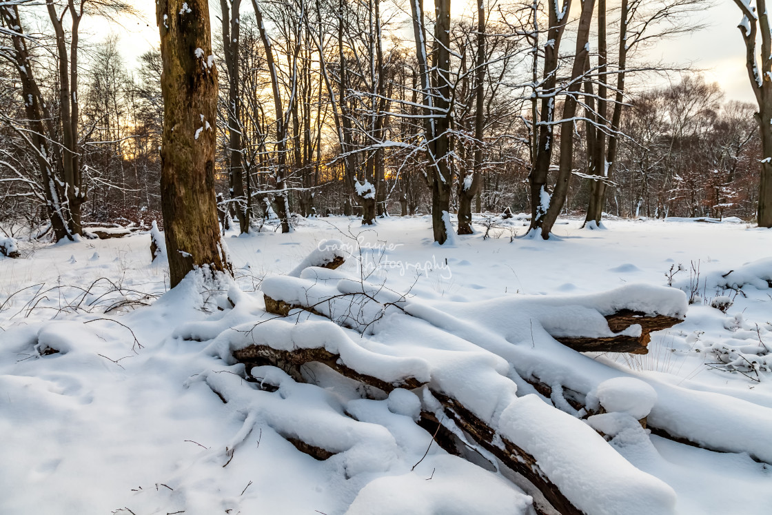 """""""Snow Covered Woodland"""" stock image"""