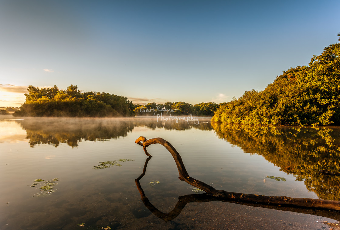 """Epping Forest Sunrise"" stock image"