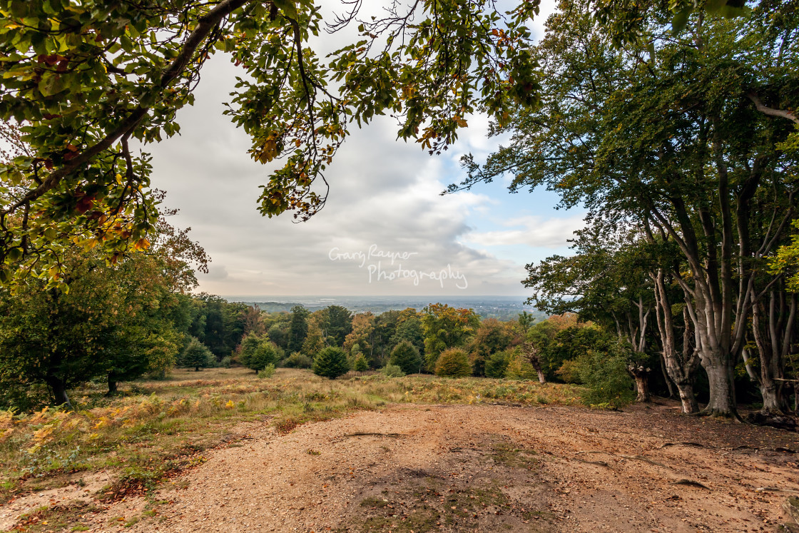 """Epping Forest View"" stock image"
