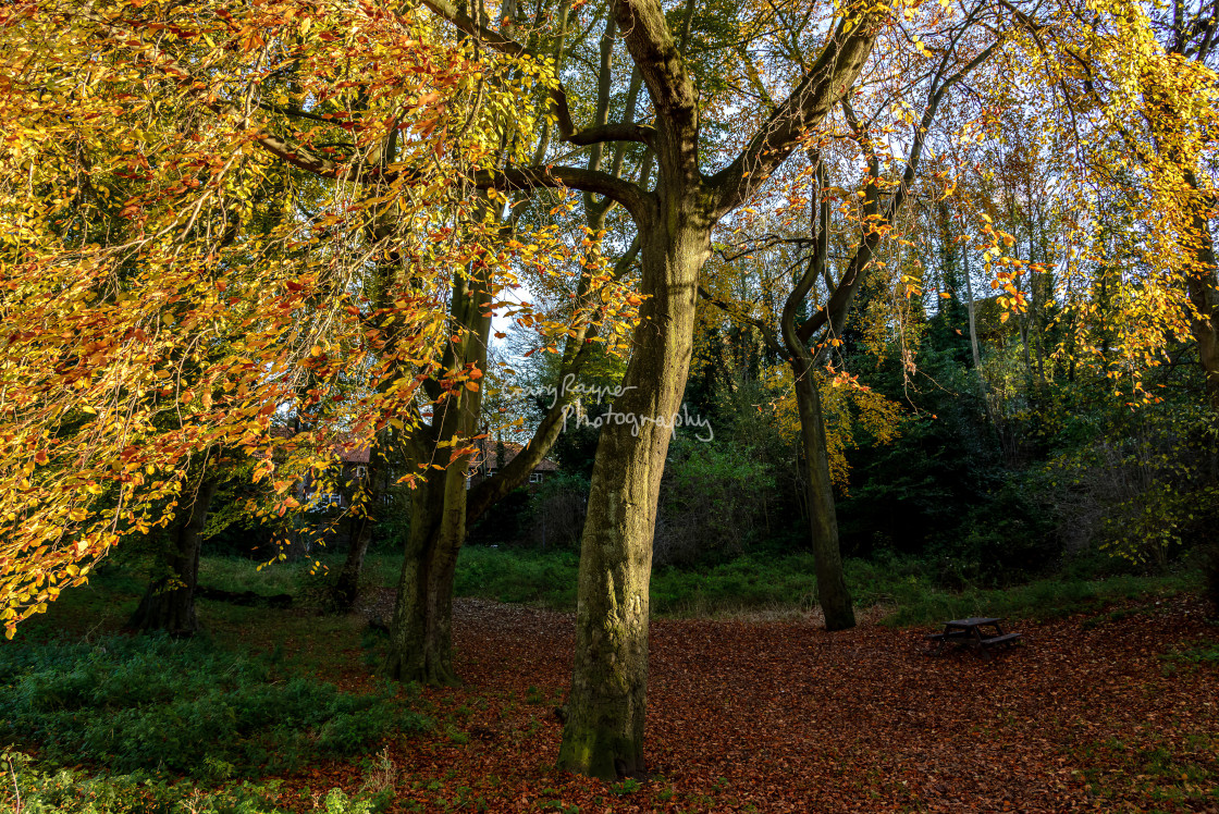 """""""Autumn in the Dell"""" stock image"""