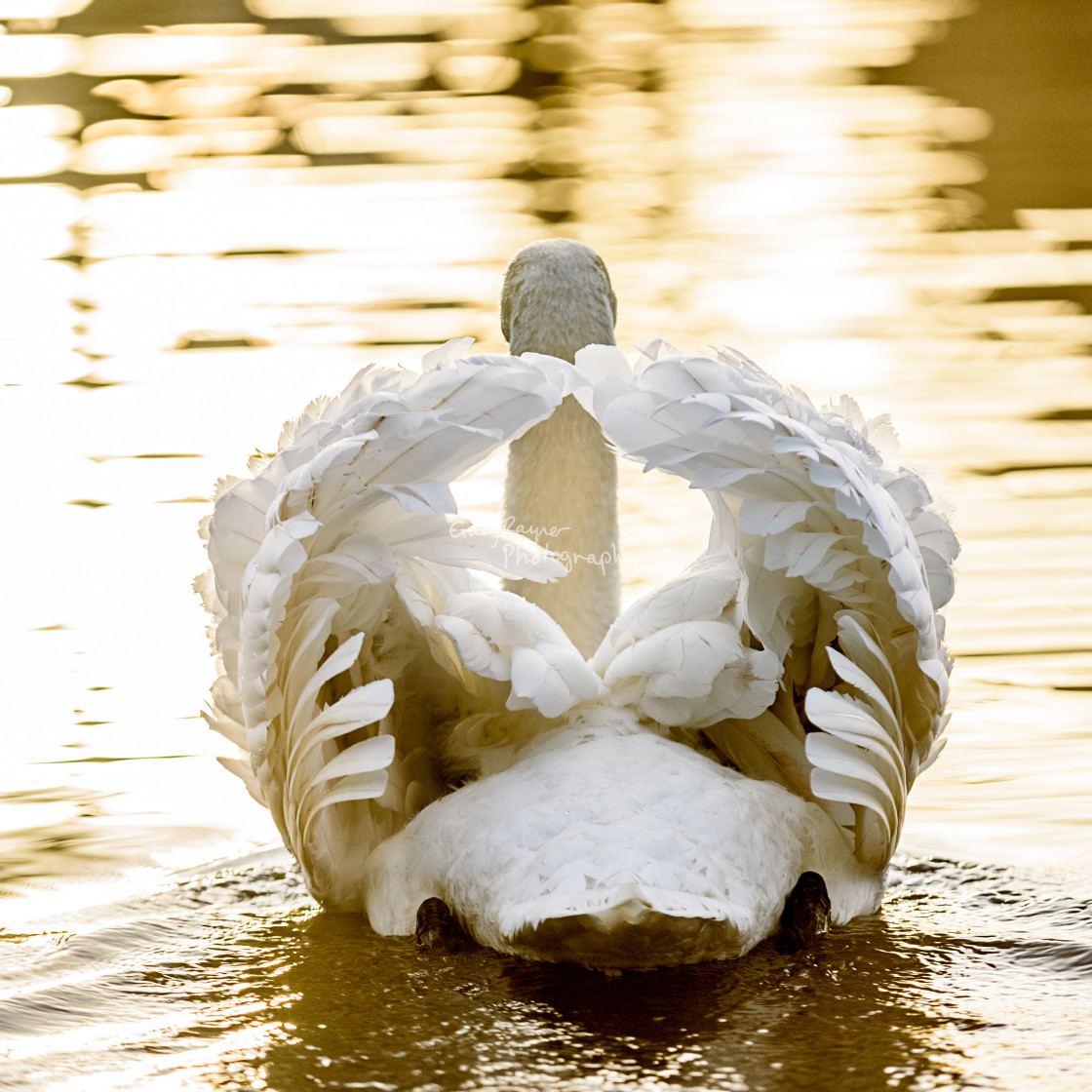 """Swan Flower"" stock image"