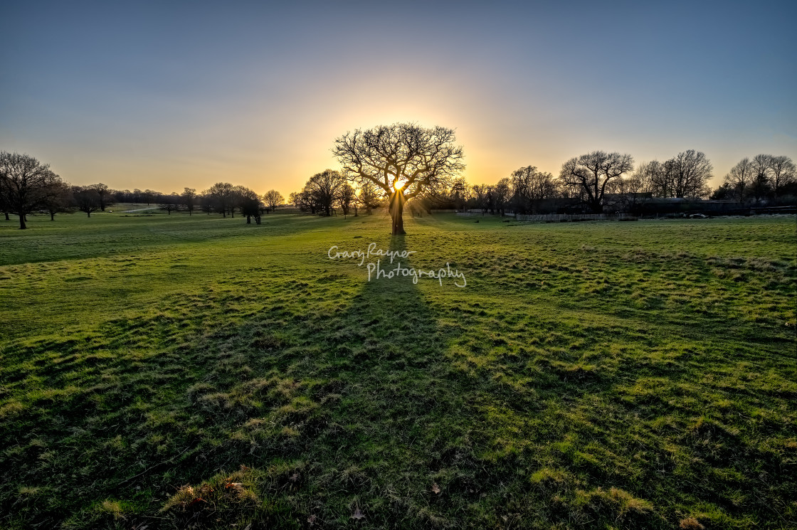 """Tree of Light"" stock image"