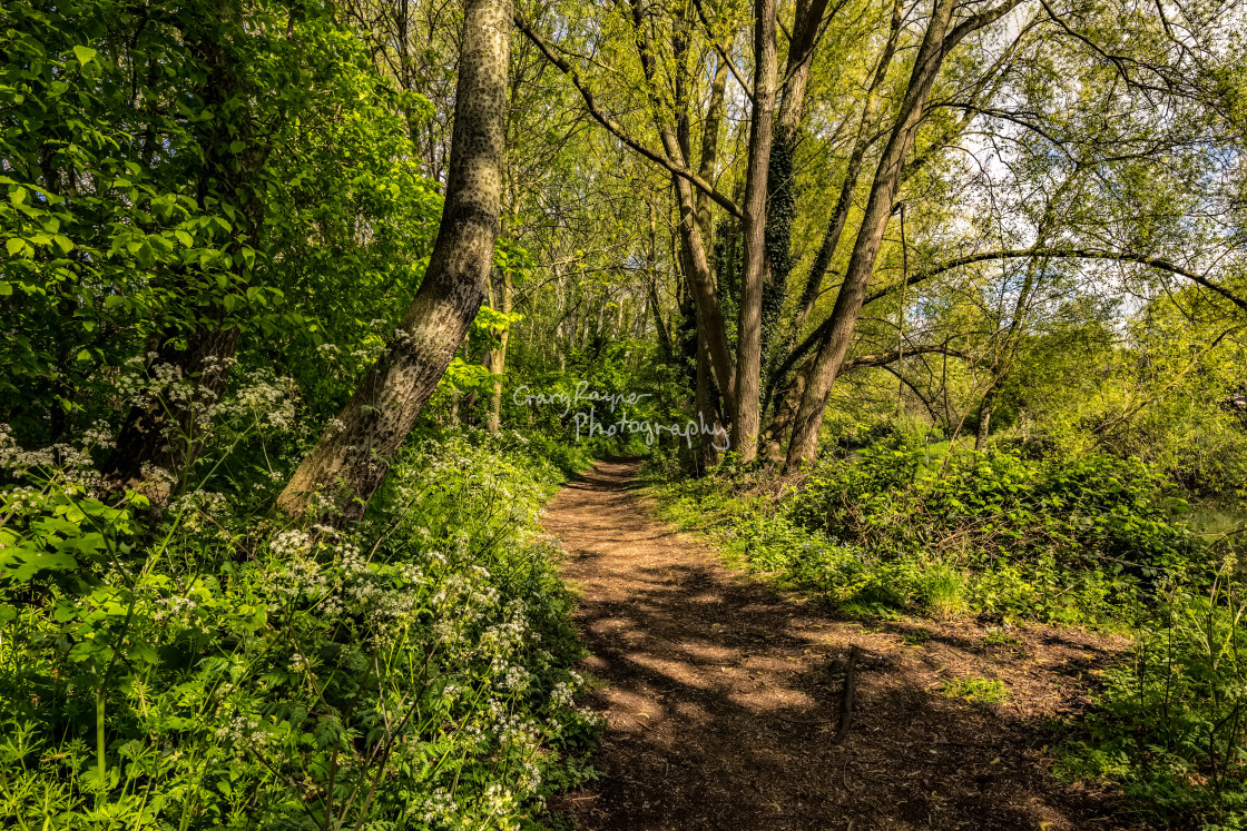 """Pathway Through the Wood"" stock image"