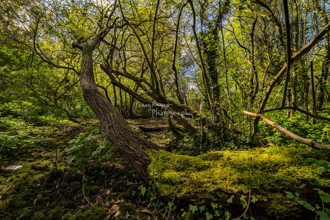 """Spring in Train Wood"" stock image"