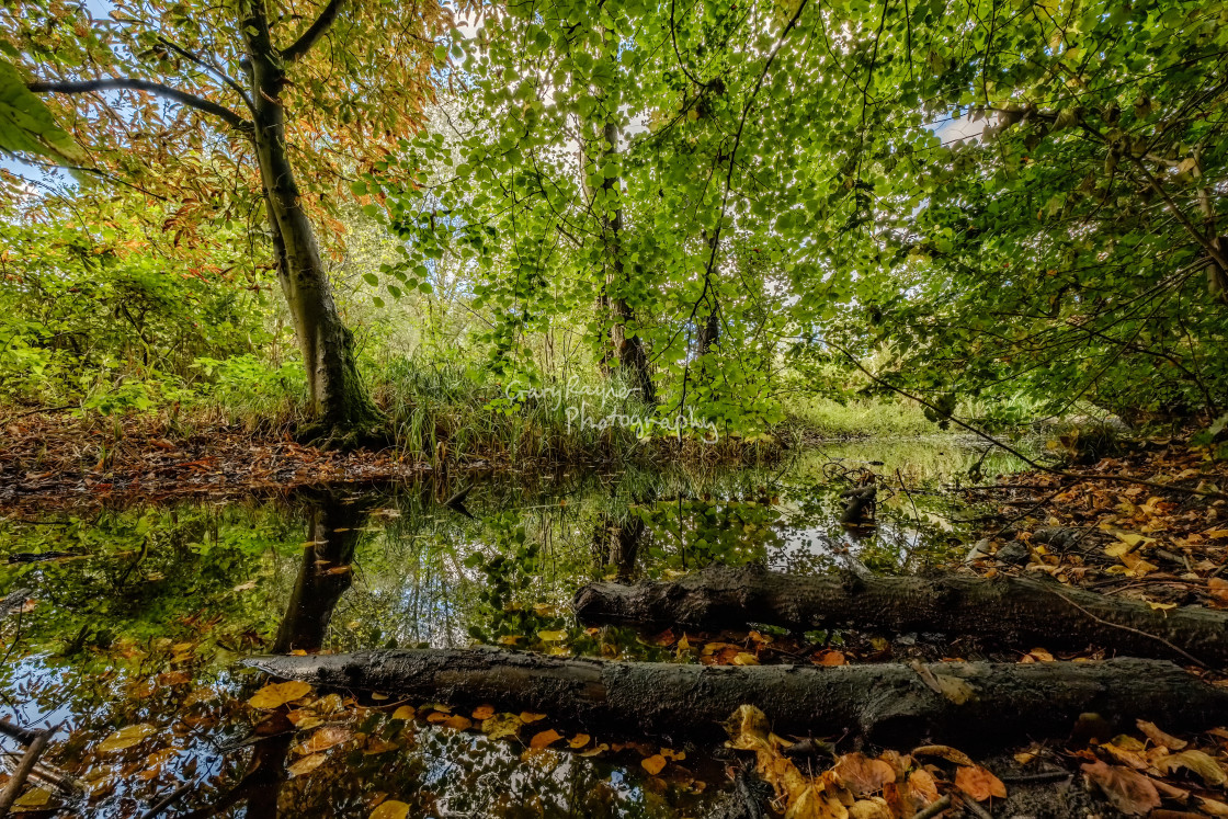 """Autumn Woods UEA"" stock image"