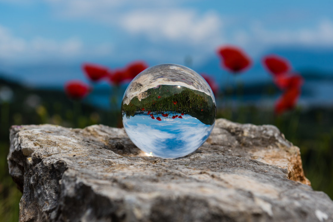 """""""Poppies reflected 2"""" stock image"""