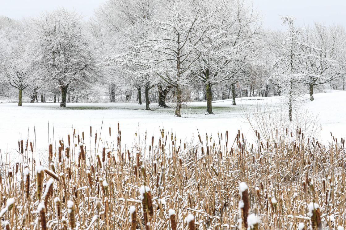 """Winter landscape"" stock image"