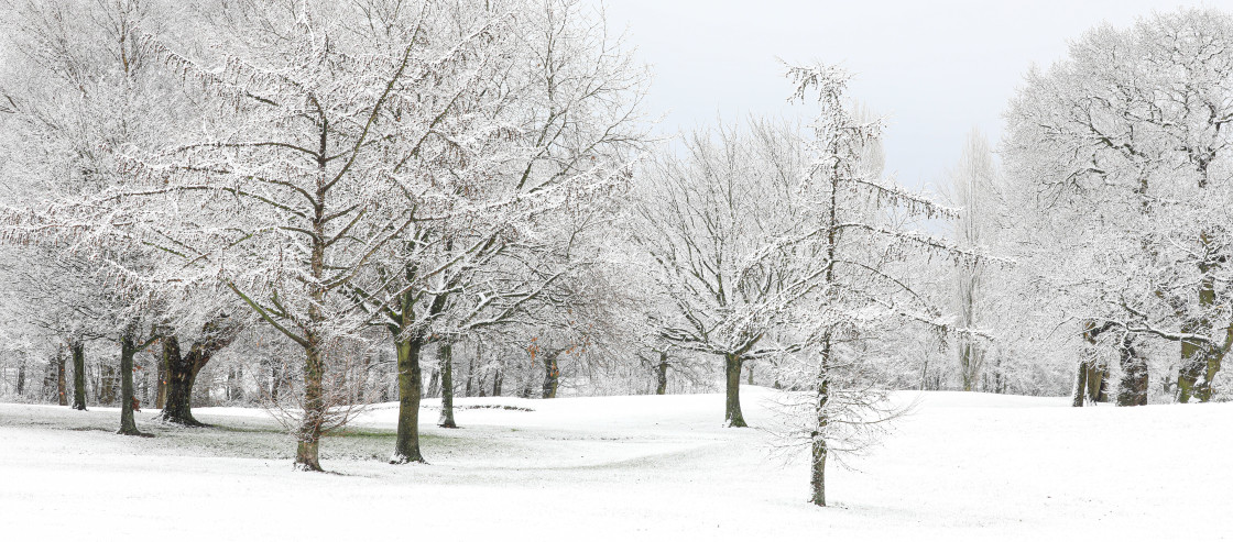 """""""Snow covered landscape"""" stock image"""