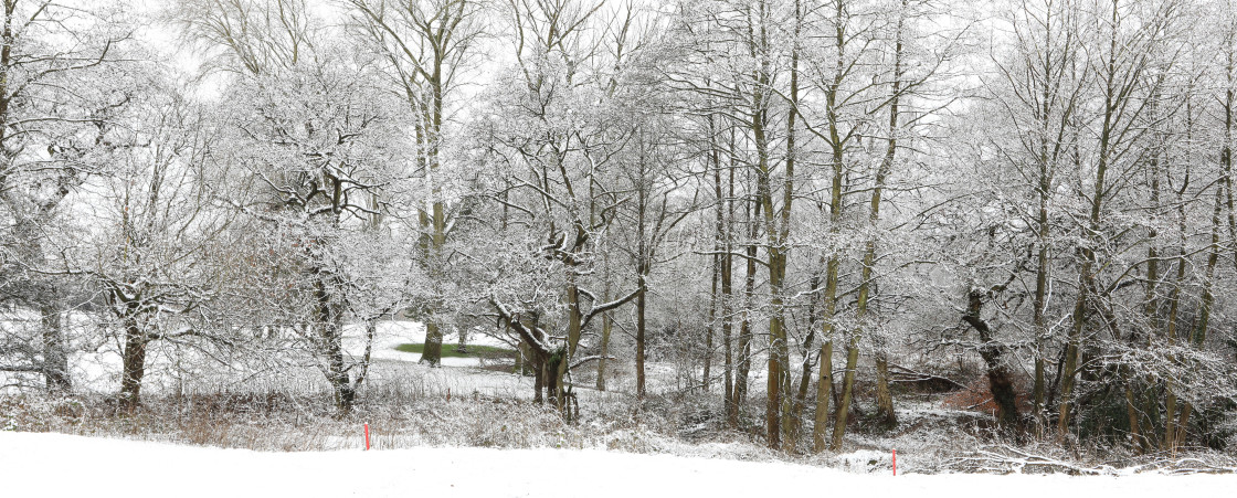 """""""Snowy trees in the landscape"""" stock image"""
