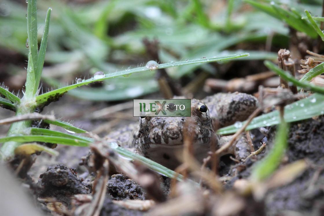 """Wildlife mood (aka frog-spotting in the rain)"" stock image"